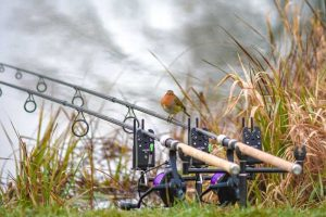 Pêche rapide carpe en hiver